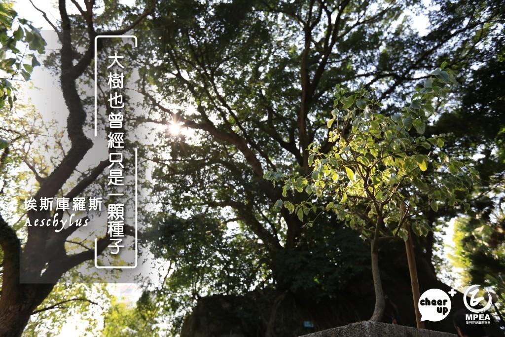 0803_tree-02